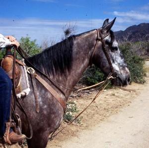 Cowboy Martingale